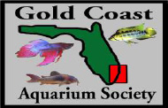 Gold Coast Aquarium Society
